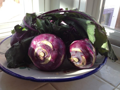 Purple Kohlrabi or Monje Haak, the heart's desire vegetable of all Kashmiris